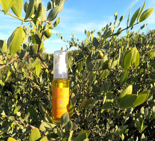 ♡ アリゾナ州原産原種灌木(雌・Queen)とホホゴールド