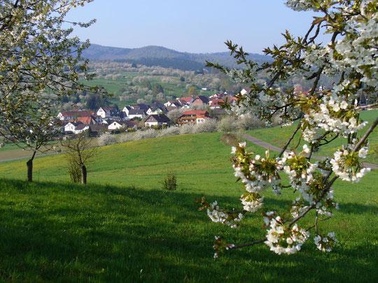 Unser Haus am Ortsrand in der Kirschblüte