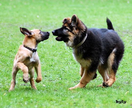 Arni und Laica