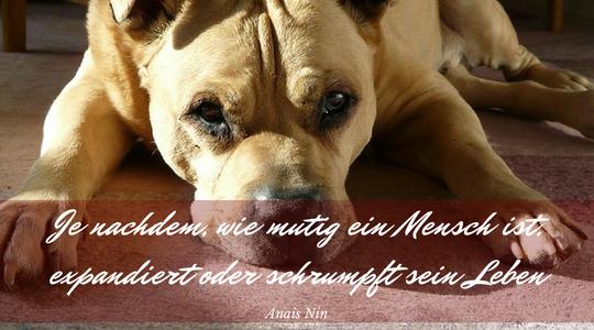 Hund leigt müde auf dem Boden. Spruch: Je nachdem wie mutig ein mensch ist, expandiert oder schrumpft sein Leben - anais nin