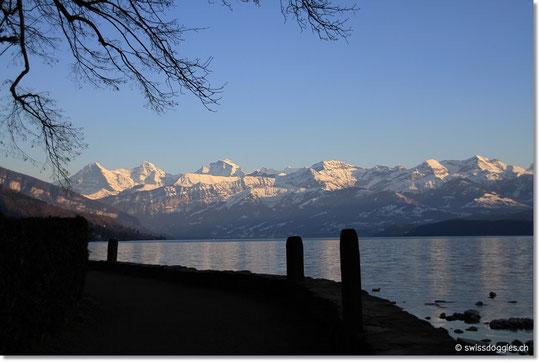 Blick auf die Berner Alpen.