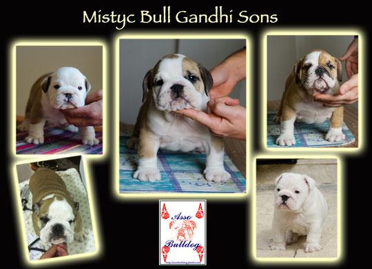 Bellissimi maschi figli di Gandhi !