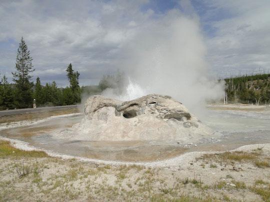Grotto Geyser (Yellowstone N.P.)