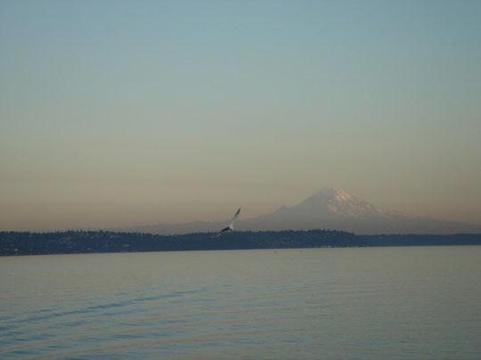 ein letzter Blick auf den Mount Rainier