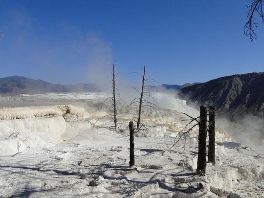 isch aso kei Schnee, Mammoth Hot Springs (Yellowstone N.P.)