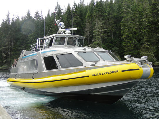 Naiad Explorer - unser Whale Watching Boot