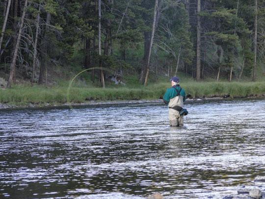 kein Bär, aber auch ein Fischer