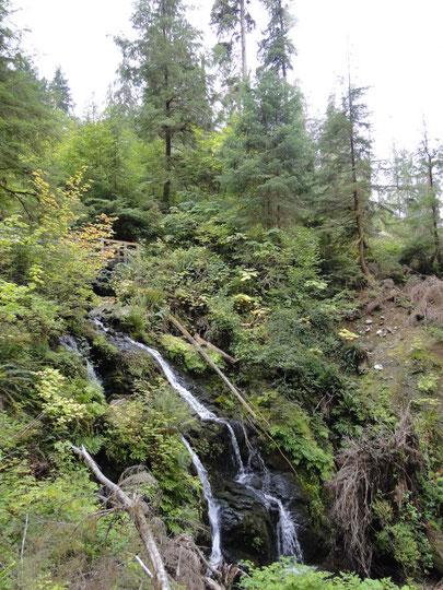Cascade Falls (Olympic N.P.)