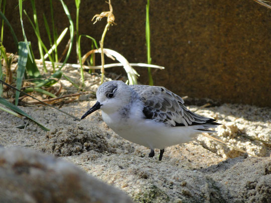 23-jähriger Vogel (echt!)