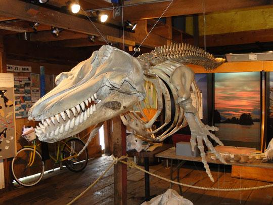 Orca - morgen dann mit Fleisch am Knochen