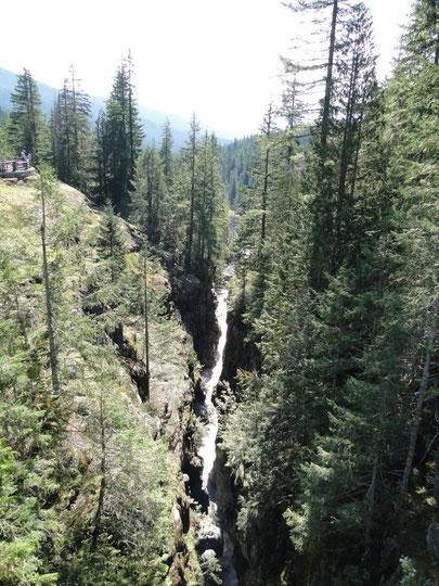 Sunbeam Creek (Mount Rainier N.P.)