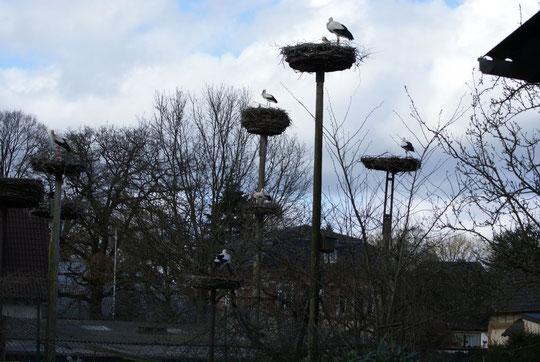 einblick auf die kolonie in der mitte nest 1