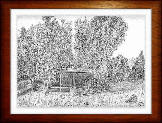 Höltigbaum   Bleistiftzeichnung  42 x30 cm