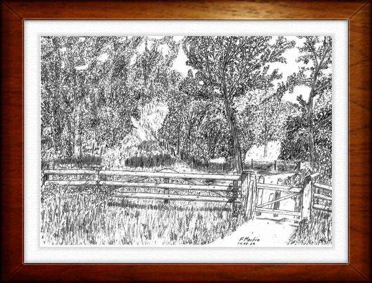 Höltigbaum 2   Bleistiftzeichnung  42 x30 cm