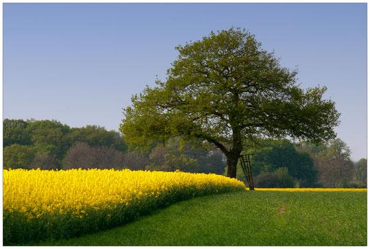 Frühling im Landkreis Nienburg