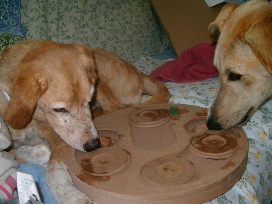 meine 2 Intelligenz-Hundchen