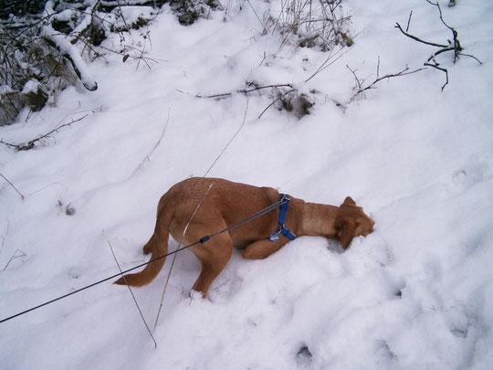 Buddeln geht prima im Schnee