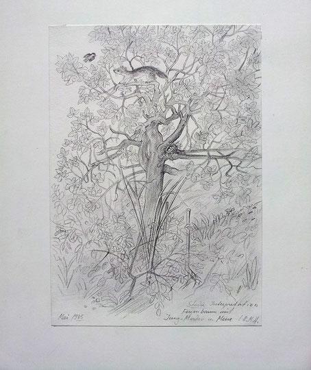 Feigenbaum mit Jungmarder und Meise