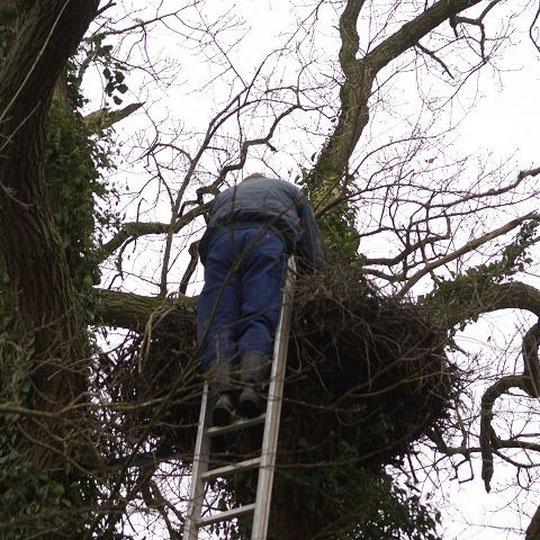das Nest gibt es nicht mehr