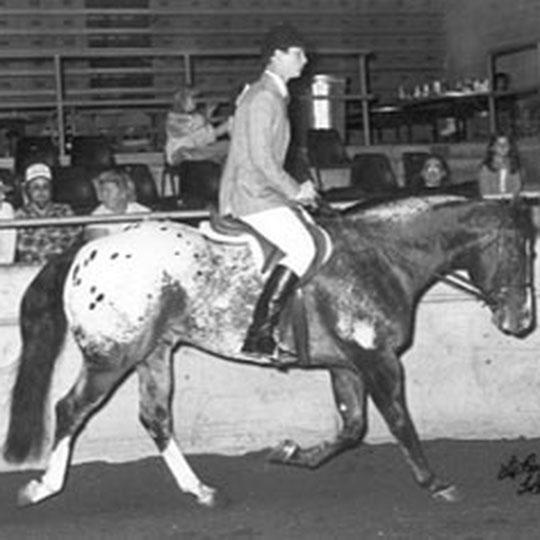 Sir Wrangler | Appaloosa Old-Line | Appaloosa Foundation | Appaloosa Sport Horse | Appaloosa Classic | Foundaloo(sa) | By SIX C Appaloosa