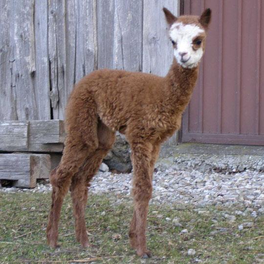 Iduna als Baby März  2011