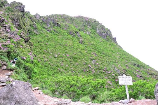 マタエに到着。おかまを一周するのはかなりきついという。最高峰の西峰も絶壁やカニの横這いもあって危険らしい。迷っていたら下山してきた男性がぜひ登るべしと決心を付けてくれた。(登山口で西峰は怖いからと敬遠していた男性もついてきた)