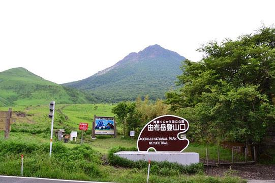 目指す由布岳は富士山です。大体は草山だが、この面には低木ながら樹林帯がある。