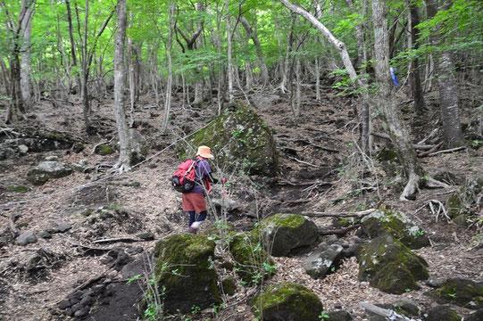 その樹林下に緩やかにジグザクの登山道が付けてあり、富士山にしては案外歩き易かった。