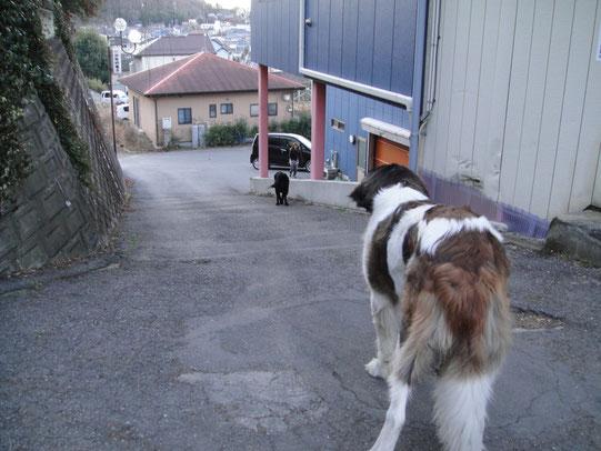 ひろみさ~ん待ってたよ~今日も寒いけどお散歩宜しくお願いします。バチ&ドン