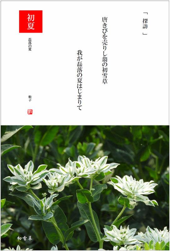 2017/07/23制作 磊落の夏