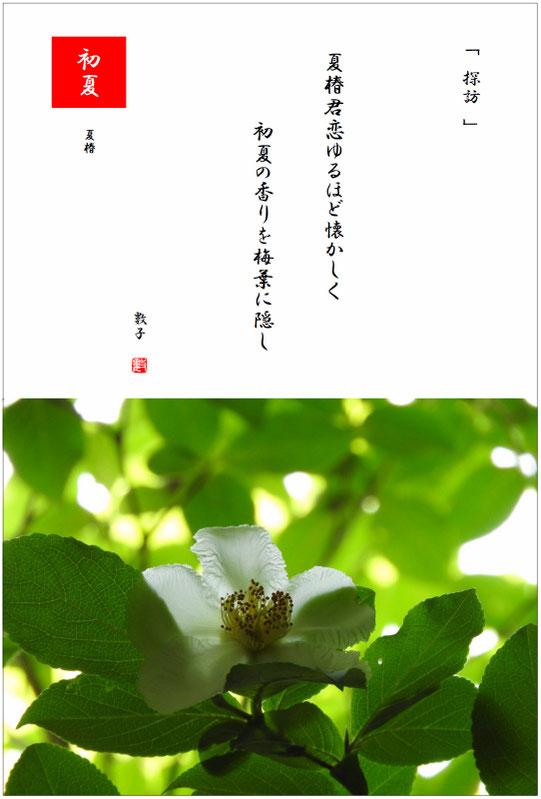 夏椿(なつつばき) 2021/06/09制作