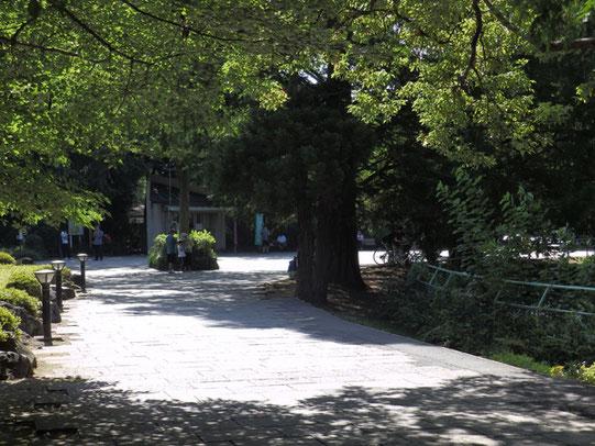 大宮公園内の池のそばです。