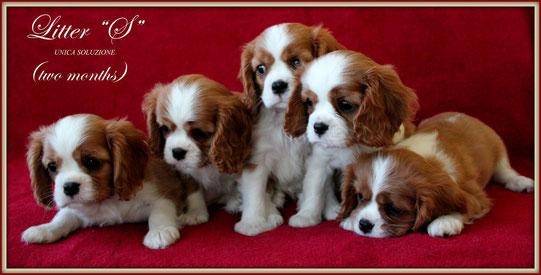 ***Cuccioli a due mesi***