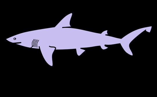 Morfología externa de un tiburón