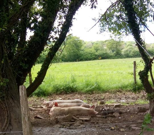 Une sieste - La Zad Notre-Dame-des-Landes - Mai 2018