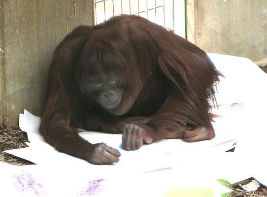 Malsession mit Sita im Affentropenhaus des Krefelder Zoos