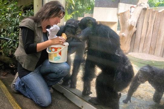 Das absolute Highlight für die Schimpansen: Eiswaffeln mit Heimchen für das Plus an Proteinen.
