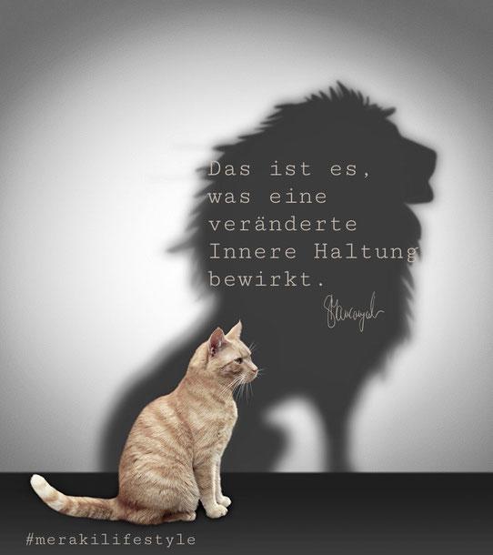 Bild Katze Mut Löwe Veränderung Schatten