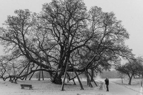 Baum im Schneesturm