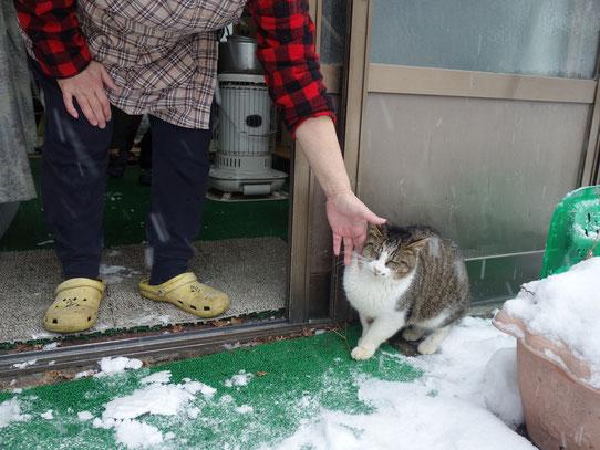 なんとも人懐っこい 若葉荘で世話をしている3歳野良猫の愛之助くん(通称あいちゃん)