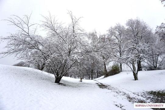11月末に大雪が降りました。海が無く、アルプスが近いためミュンヘンは雪が降りやすいそうです。