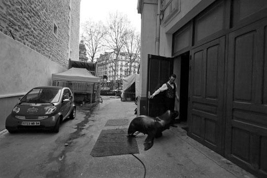 Gaëlle Girbes Circus Life Cirque photographie noir et blanc cirque d'hiver otarie