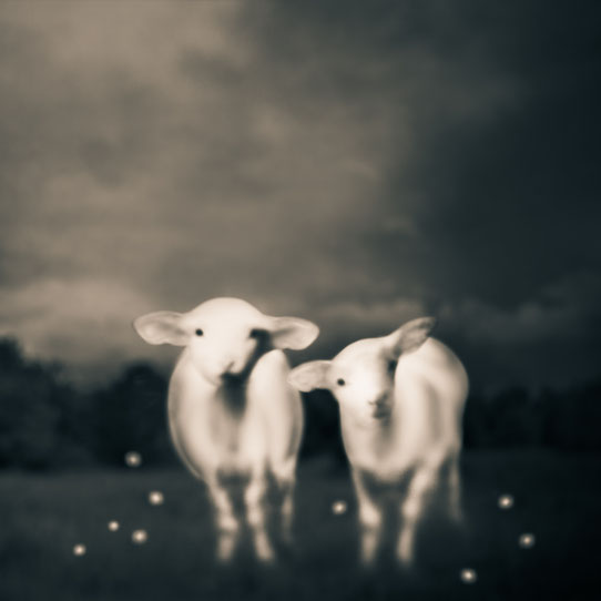 Tami Bone Texas Photography Mythos Fauna river deers Black and white