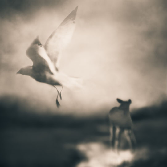 Tami Bone Texas Photography Mythos Sanctuary Sheep Black and white