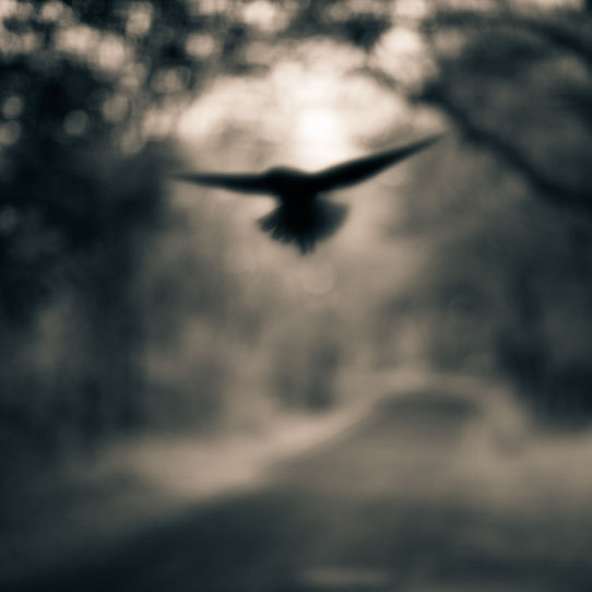 Tami Bone Texas Photography Mythos Black winged bird 2012 Black and white