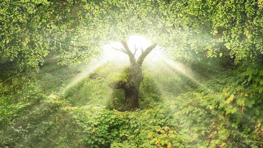 Jardin d'éden - l'arbre de vie