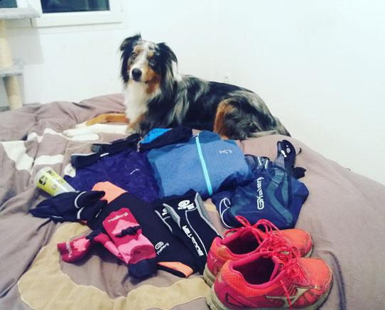 Chien sportif, berger australien, racepack, saintelyon, matériel saintelyon, équipement saintelyon