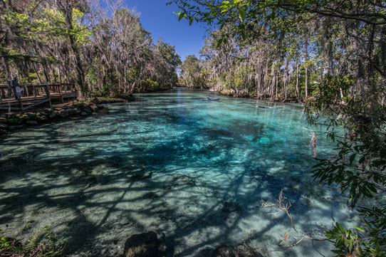 Crystal River en Floride !