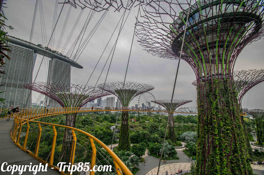 Le Garden by the bay  à Singapour !
