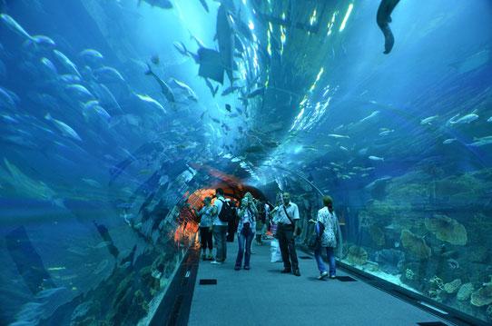 L'Aquarium de Dubaï, Dubai Mall, Dubaï